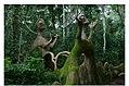 Osun-Osogbo Sacred Grove.jpg