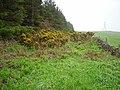 Overgrown track, Overhowden - geograph.org.uk - 175722.jpg