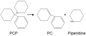 Phencyclidine - Conversion of PCP into PC and piperidine by heat.