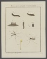 Pachyrhina - Print - Iconographia Zoologica - Special Collections University of Amsterdam - UBAINV0274 038 03 0031A.tif