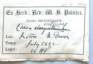 William Hunt Painter - Herbarium label by W.H.Painter