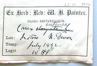 William Hunt Painter - Herbarium label by W.H.Painter