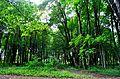 Park w Tychowie (2).JPG