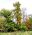 Parkansichten Queen-Auguste-Victoria-Park (Umkirch) jm54407 ji.jpg