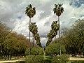 Parque Amate 01.jpg