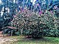 Parque Estadual da Cantareira - Núcleo Engordador.jpg