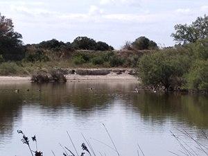 Parque Natural de la Albufera (I).jpg
