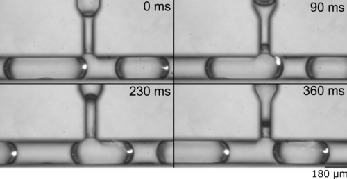 Particle seperation in nL droplets.png