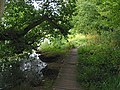 Path in National Trust wood along bank of Curbridge tributary of River Hamble - geograph.org.uk - 219966.jpg