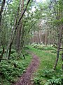 Path in Seventy Acre Wood - geograph.org.uk - 495880.jpg