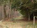 Path to Kintessack via Culbin Forest - geograph.org.uk - 251949.jpg
