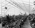 Payne Midyette in greenhouse.jpg