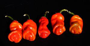 Peter pepper,Capsicum annuum var. annuum 2.jpg