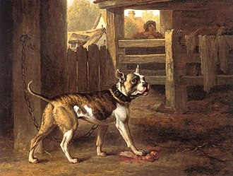 Bulldog - Painting of a Bulldog from 1790 by English artist Philip Reinagle.