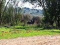 PikiWiki Israel 34535 Geography of Israel.JPG