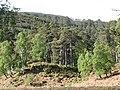 Pine woods, Glen Strathfarrar - geograph.org.uk - 446579.jpg