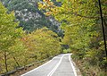 Plane trees on mountain pass Sparta-Kalamata - panoramio.jpg