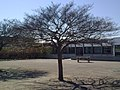 Playground Tree (254749319).jpeg