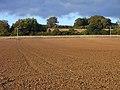 Ploughed field, Whittington - geograph.org.uk - 1557810.jpg