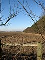 Ploughed field adjacent to Bulmer Coppice - geograph.org.uk - 686069.jpg