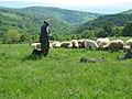 Pojejena, Romania - panoramio.jpg