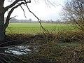 Pond at Blackmore End - geograph.org.uk - 637584.jpg