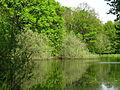 Pond at the arboretum 02.JPG