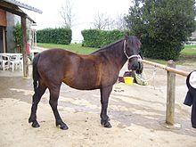 poney landais