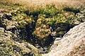 Pot Hole below Wild Boar Fell - geograph.org.uk - 4088.jpg
