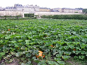 Image illustrative de l'article Potager du Roi
