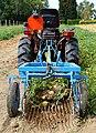 Potato harvester J1.jpg