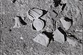 Potsherds (close up) Atil 2014.jpg