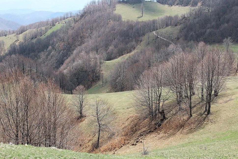 Povlen - zapadna Srbija - severni obronci Malog Povlena - mesto Kneževo polje detalj 11