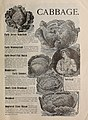 Price list of Haskin's seeds (1901) (20535256726).jpg