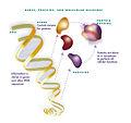 Protein Machine.jpg