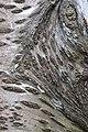 Prunus cerasus Montmorency tree bark 20.jpg