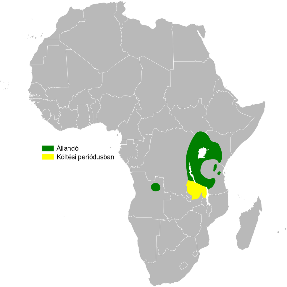 Psalidoprocne albiceps distribution map