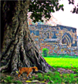 Puppy near historical monuments in feroz shah kotla.png
