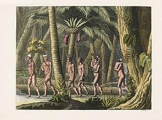 Puris nelle loro foreste