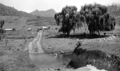 Queensland State Archives 2121 Scene on Upper Tallebudgera Creek January 1937.png