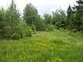 Quellmoor bei Honsfeld, Ostbelgien (15035472865).jpg