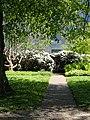 Rådhusparken (rhododendron).jpg
