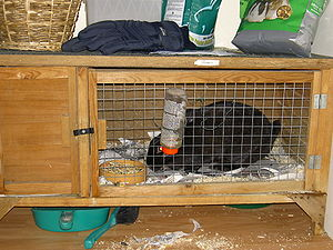 Hutch (animal cage) - A rabbit in a tiny hutch