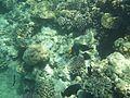 Rafa koralowa Hurgada(11).JPG