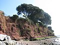 Red cliffs south of Lympstone - geograph.org.uk - 1208475.jpg