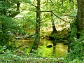 Reflections- East Lyn River, Exmoor (10190086393).jpg