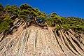 Relict pine forest near Praskoveevka - panoramio.jpg