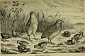 Reptiles and birds - a popular account of their various orders, with a description of the habits and economy of the most interesting (1883) (14752385475).jpg