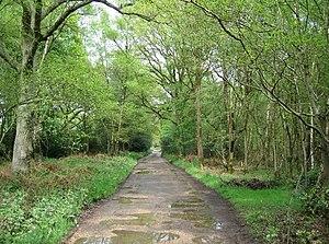 Bucklebury Common - Byway in Bucklebury Common