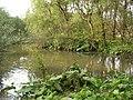 Rezerwat Bobry w Uhercach 01.jpg